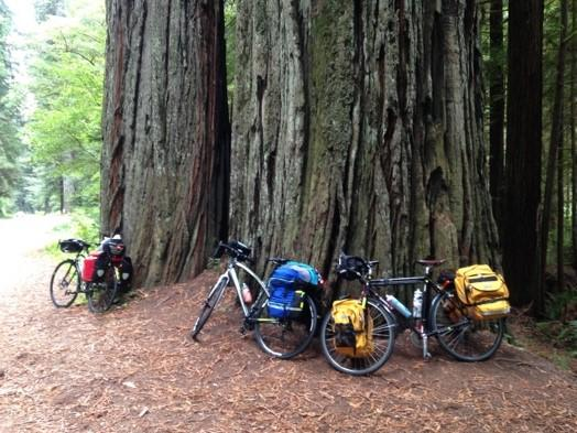 Bikes against majestic Redwoods